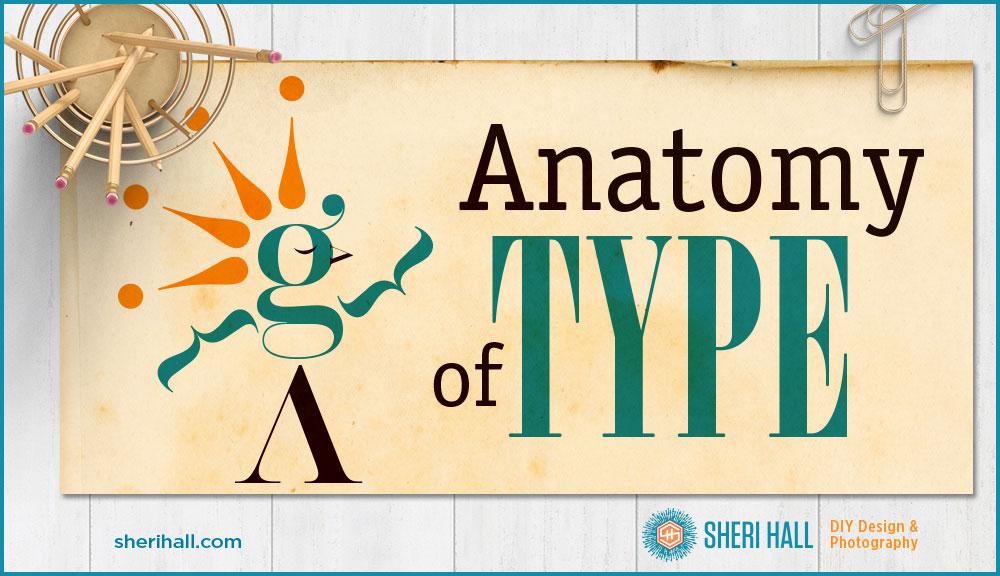 Anatomy Of Type Sheri Hall